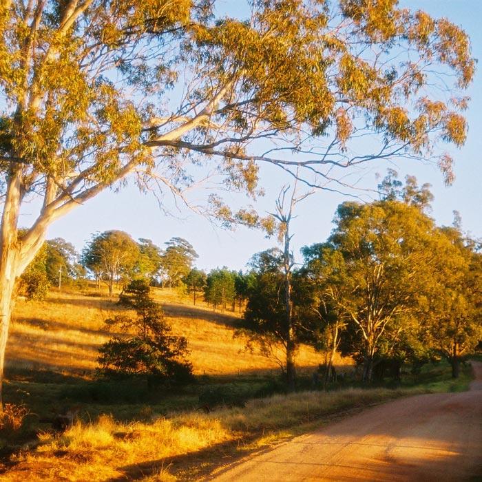 Crows Nest dirt road