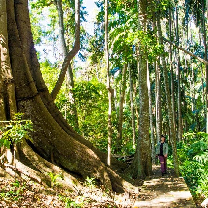 Woman walking through The Palms National Park