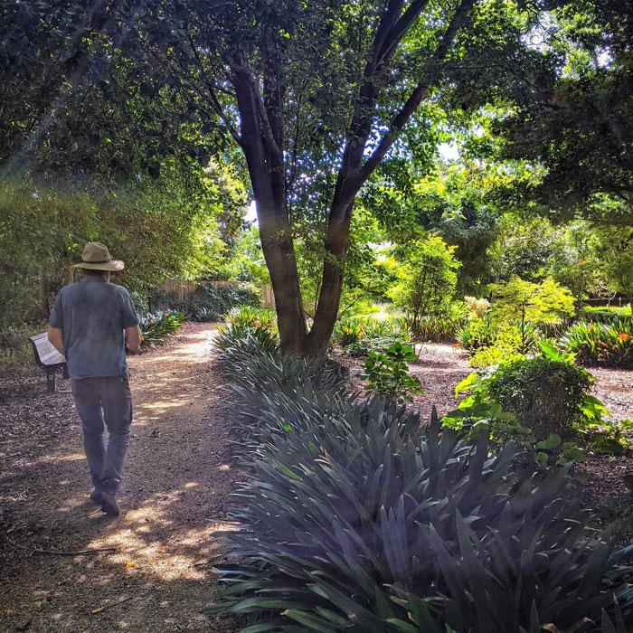 David Arboretum park